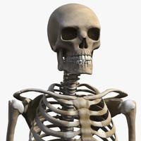 human skeleton 3d xsi