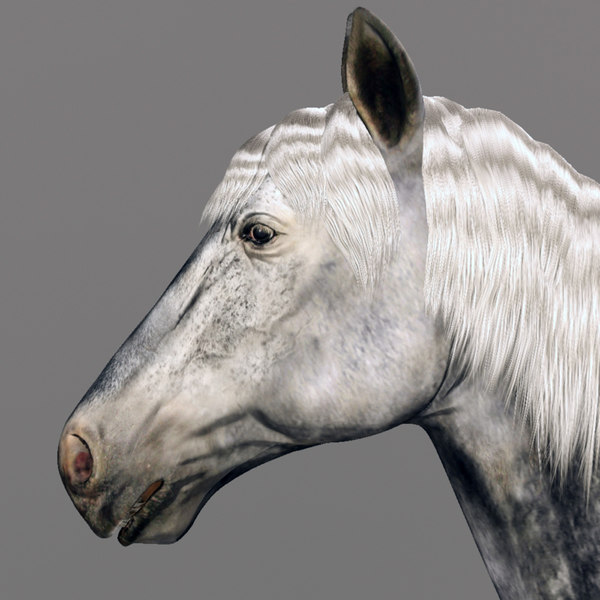 horse animal obj - Horse Animal... by CG ARTStudio