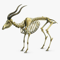 Goat Skeleton 2