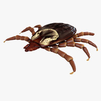 female dog tick dermacentor 3d model