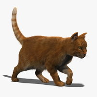 3d model cat orange tabby fur