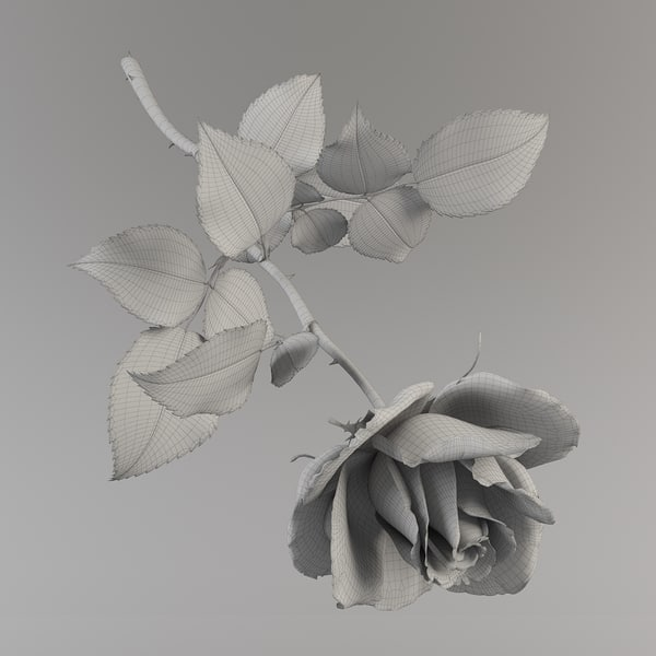 3d rose modeled - Rose 19... by ms_Dessi