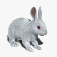 Rabbit (White) (FUR)