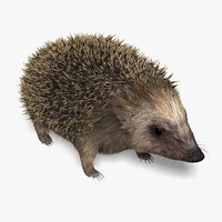 hedgehog fur 3d ma