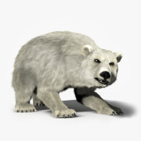 max polar bear rigged -
