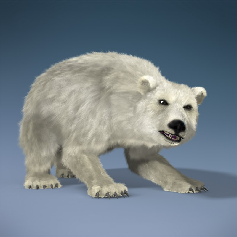 Polar Bear_C.png