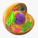 Animal Cell 3D models