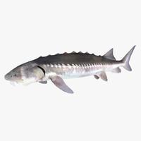 3d sturgeon fish
