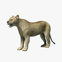 max lioness animation