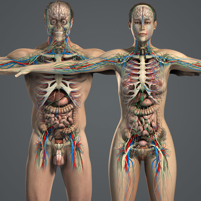 Male_and_Female_Anatomy_Essentials_01.jpg