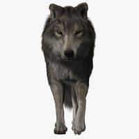 Wolf (2) (FUR) (ANIMATED)