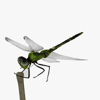 dragonfly animation insect max