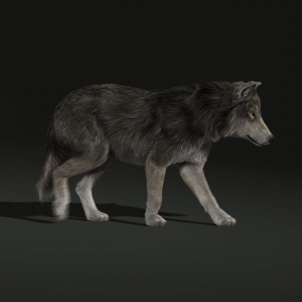 Wolf Fur Animations 2 3d Model
