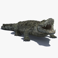 Crocodile (RIGGED)