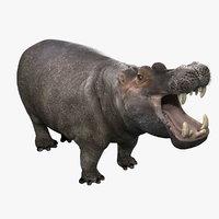 Hippopotamus (2)