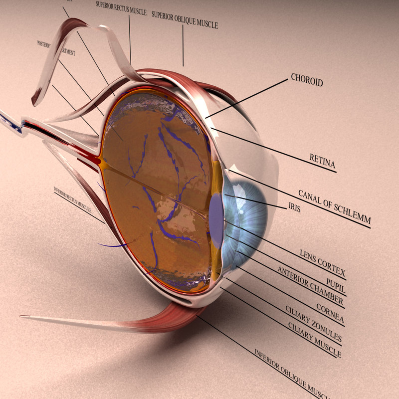 eye-section-first2.jpg