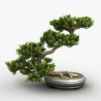 bonsai tree c4d