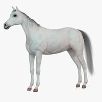 3d white horse 1