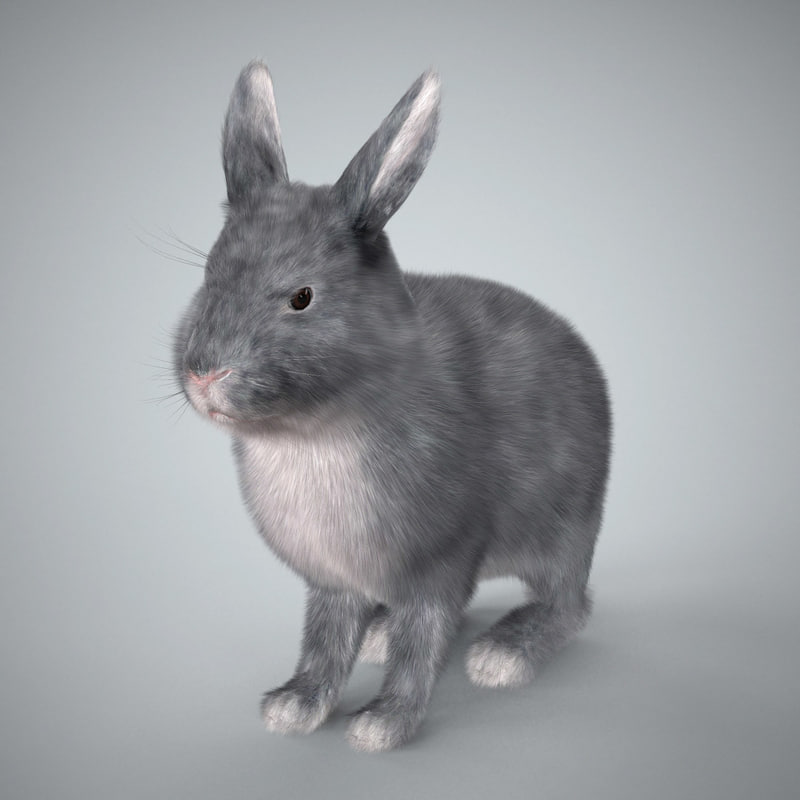 little grey rabbit purpose Hello little grey rabbit and thank you for your postings i'm amazed at the amount of disdain directed your way from some of the folks at.