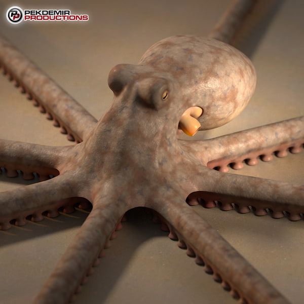 octopus beak 3d max - Octopus... by Pekdemir
