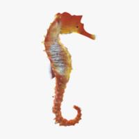sea horse 3ds