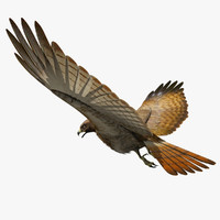 3ds max red tailed hawk