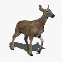 Doe (FUR) (ANIMATED)