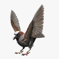 3d max house sparrow