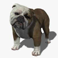 Bulldog 3D models