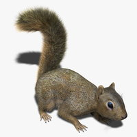 Squirrel (RIGGED) (FUR)