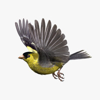 3d model goldfinch rigged animation