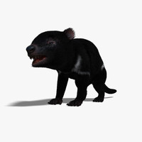 tasmanian devil animal fur 3d model