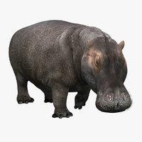 photorealistic hippopotamus rigged ma