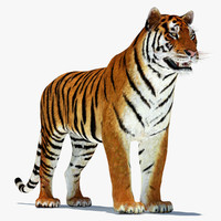 tiger modelled 3d model