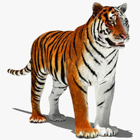 3d model tigers modelled white
