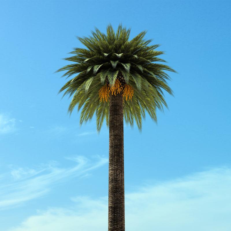 palm-b.jpg