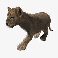 Lion Cub (ANIMATED) (FUR)