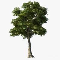 ash tree 3d model