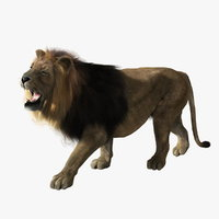 3d model lion fur animation