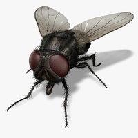 housefly fly ma