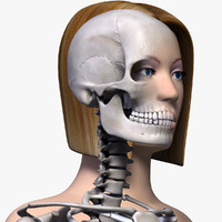 Female Body & Skeleton