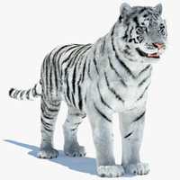 amur tiger white 3d model