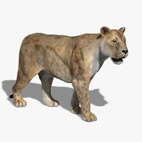 Lioness (2) (RIGGED) (FUR)