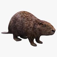 3d model beaver modelled