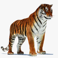 amur siberian tiger cat 3d model