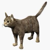 3d model cat fur