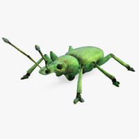 3ds curculionidae snout beetle insect