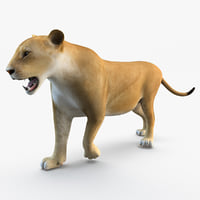 3d model lioness animal modelled