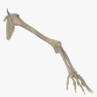 3d arm skeletal