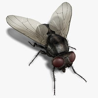 housefly rigged 3d ma